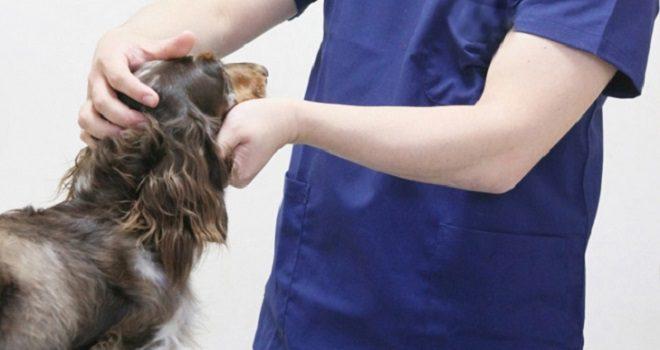 良い動物病院の選び方