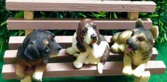 自分に合った犬の選び方