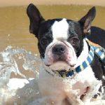 愛犬の下痢への対処法