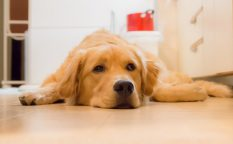 愛犬の嘔吐への対処法