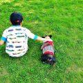 子犬を飼う前に知っておこう!犬のしつけの考え方 – 獣医に聞くしつけシリーズ Vol.1