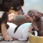 犬の栄養と繁殖への影響