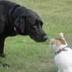 他の動物や生活音に対するしつけの仕方