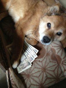 お金持ちのコンちゃん