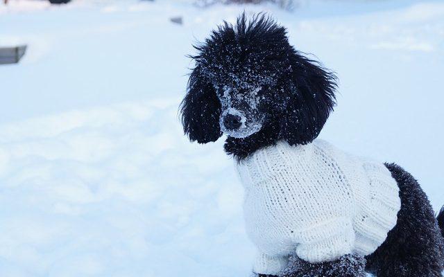 犬の防寒グッズ