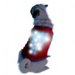 ライトグッズで犬を夜道の危険から守ろう!夜のお散歩に使えるグッズ4選