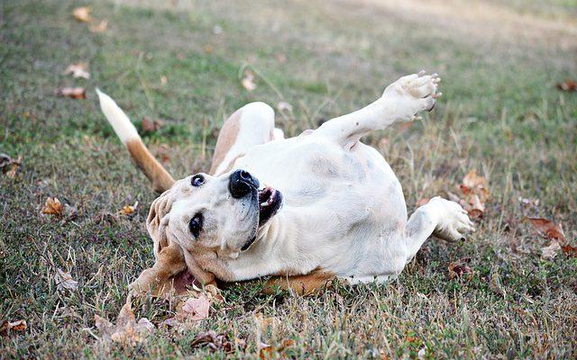 自宅でも簡単に使える犬のノミ・ダニ取りグッズ4選