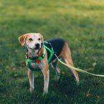 安全な散歩を実現するためにおすすめの犬用ハーネス4選