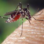 愛犬が蚊に刺されないためにおすすめの蚊よけグッズ