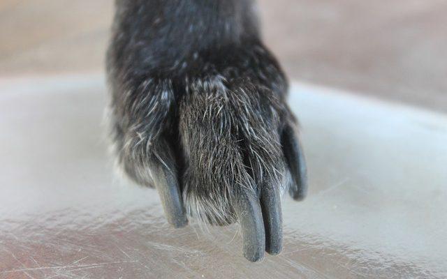 愛犬の爪切りにおすすめ!自宅で簡単に使える爪切りグッズ4選