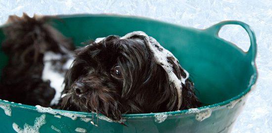 犬のシャンプー初心者におすすめしたいシャンプー