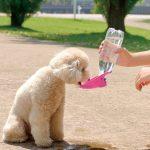 愛犬との散歩時にあったら便利なグッズ4選