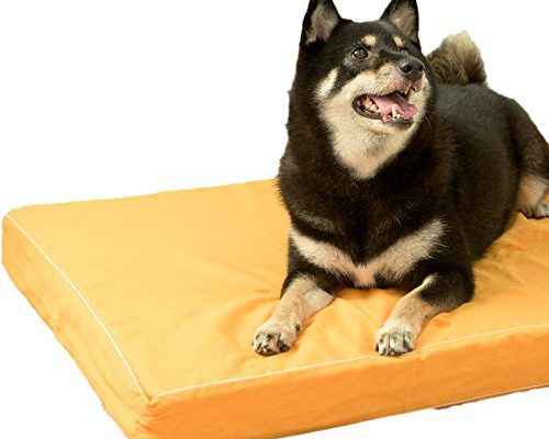 おすすめの老犬介護グッズ4選!床ずれから愛犬を守ろう!