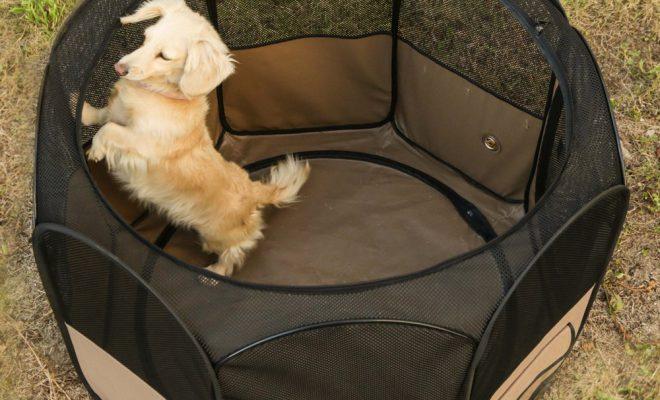 室内犬におすすめのペットサークル4選!用途に合わせてサークルを選ぼう!