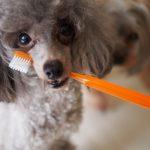 愛犬におすすめの便利な歯磨きグッズ