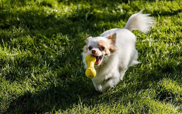 愛犬との遊びにおすすめのおもちゃ4選