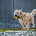 愛犬と外で遊ぶために最低限必要なグッズ6選