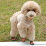 犬用のおすすめ靴3選 - 愛犬の足を熱さや汚れから守ろう